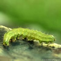 Caterpillar 2 by FrancescaDelfino