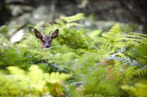 Guess who's in the ferns? by Seb-Photos