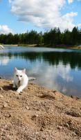 Even cats like beaches by ace-of-finland