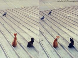 rear window cats by Anahita