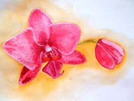 Red Orchids by drakonosirdis