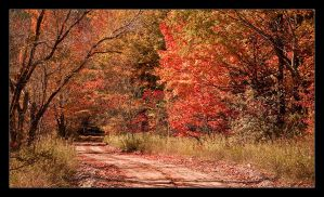 Autumn Road by BrightRedFox