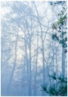 Dec 15 Morning Fog by cosmosue