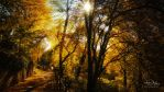 Aschaffenburg Autumn by Ian-Maynard-Davis