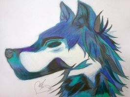 Blue Wolf by blueskies123363
