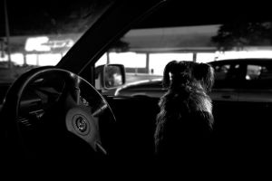 Waiting for Dad by Cameron-Jung