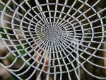 Frosted Spider Web by BuzzyG