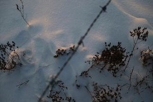 snow 'n barbed wire by stupidduck