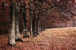 Late Autumn by bellalleb-photo
