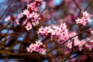 Signs of spring 3 by Martina-WW