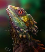 Boyd's Forest Dragon by CazziArt