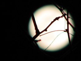 Perigee: Branches in the Moon by DivaLea