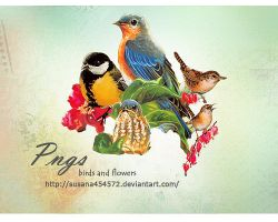 Birds and Flowers Pngs by Susana by susana454572