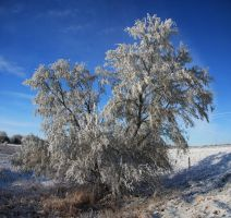 Winter Tree by Seath