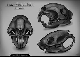 Porcupine`s Skull by Azot2015