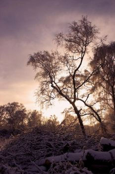 A wintery moment by scotto
