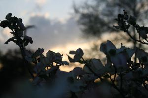 sunset on flowers by brokenphoto