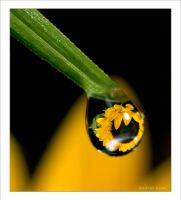 Macro Drops 01 by Hatch1921