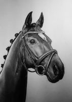 Horse drawing in black and white by Nienke15