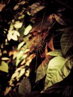 Spider's rust..... by alihassan112