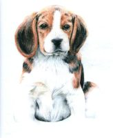 Beagle by Wings110