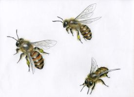 Commission: honeybee by Sabwise