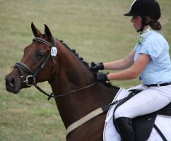 STOCK Showjumping 488 by aussiegal7