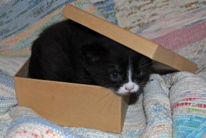 kitty and box 6 by LucieG-Stock