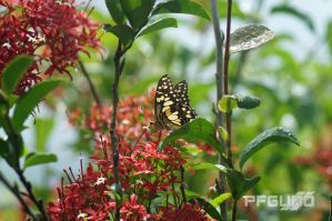 Butterfly And Red Flowers [SHOT 4] by pfgun0