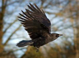 As the Crow Flies by Violet-Kleinert