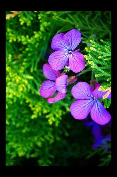 Purple and Green Part 2 by Forestina-Fotos