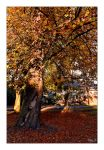 Autumn 2011 pt.2 by Riffo
