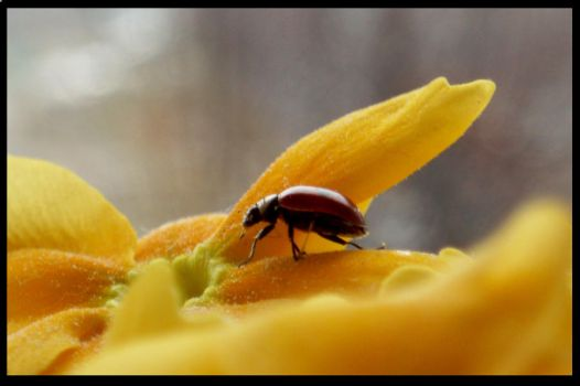 Ladybird2 by dolly41