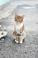 Street cat by AlexanderLoginov