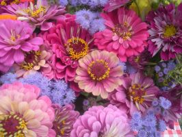 pink and purple flowers by JustMeAndACamera