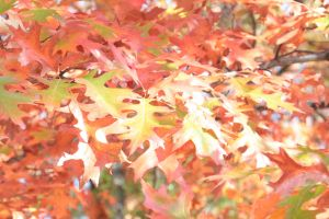 Fall foliage 2 by jswis