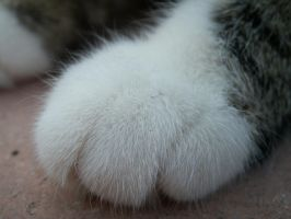 Cat paw by SianaLee