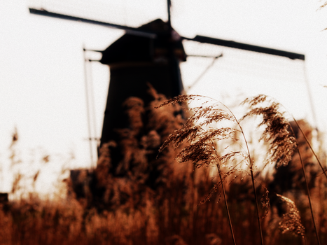 Grain or Wind. by Mollycoddled