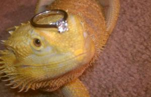 Bearded Dragon and Engagement Ring by UltimateSculpture