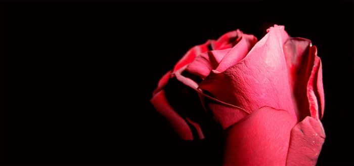 rose by a37750