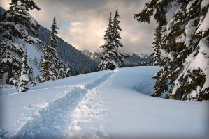 Mount Baker Winterland by CezarMart