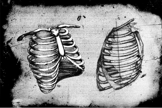 Photoshop Ribcage brushes by v-grfx