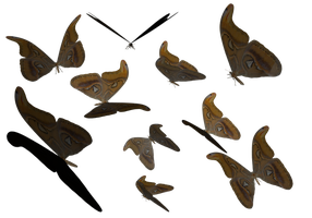 LG Atlas Butterfly Clipart PNG by madetobeunique