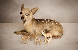 bambi by planet0
