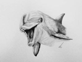 Smiley Dolphin by salt25