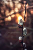 Spring Is On The Way by JustinDeRosa
