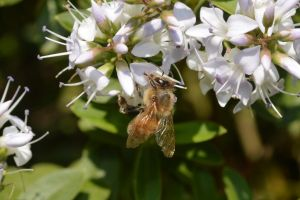 Bee! by frutillytha