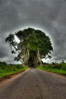 Dark Hedges by suolasPhotography