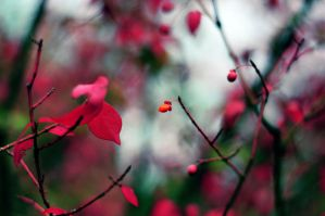 autumn red by Noise-Less