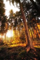 Forest On Fire by MarcoHeisler